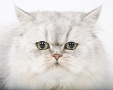 Free Persian Cat Portrait Stock Photos - 20233873