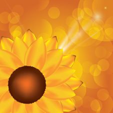 Free Sunflower Background Royalty Free Stock Images - 20234249