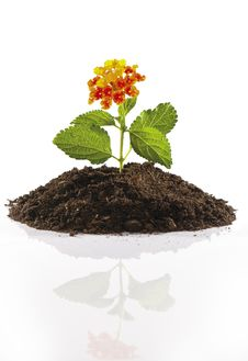 Free Small Flower On Pile Of Soil Royalty Free Stock Photo - 20235195