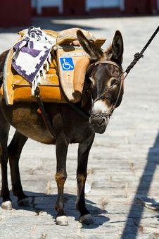 Free Donkey Stock Images - 20236424