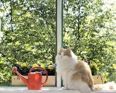 Free Cat Portrait Royalty Free Stock Photo - 20236655