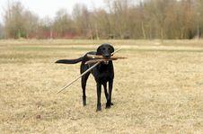 Free Black Dog Outdoor Royalty Free Stock Photos - 20236848