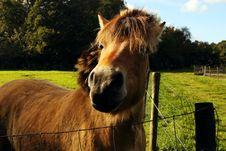 Free Horse Muzzle Stock Photo - 20236890