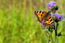 Free Butterfly Royalty Free Stock Photo - 20237185