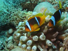 Free Coral Reef Stock Photography - 20237252