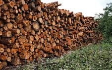 Free Stacked Cut Raw Timber Wood Logs Stock Photo - 20238960