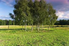Free A Beautiful Green View After Rain Royalty Free Stock Image - 20239126