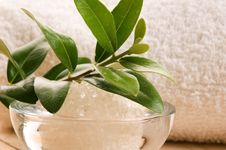 Free Sea Salt With Fresh Olive Branch Stock Photos - 20239633