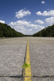 Lonely Runway With A Plant Stock Images