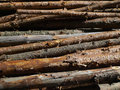 Free Blocks Of Wood At The Stake As A Background Stock Image - 20242771