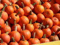 Free Pumkins Stock Photography - 20243822