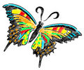 Free Butterfly Colourful Illustration Stock Photography - 20245212