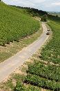Free Vineyard Road Stock Image - 20247471