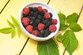 Free Forest Berries Stock Images - 20248844