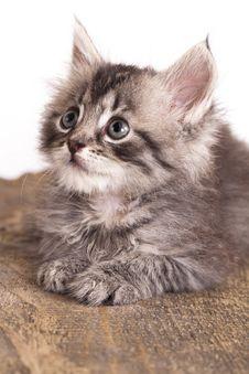Free Kitten Stock Photos - 20241893