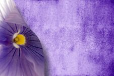 Free Passion Purple Background Stock Images - 20242044