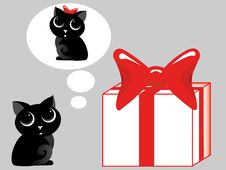 Free Gift For A Cat Stock Photography - 20242542