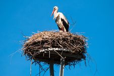 Free Stork In The Nest Stock Images - 20242814