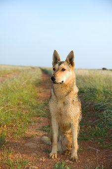Free Thoroughbred Dog Stock Images - 20243184