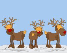 Free Reindeer Stock Image - 20244661