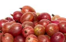 Free Gooseberries Stock Photography - 20245602