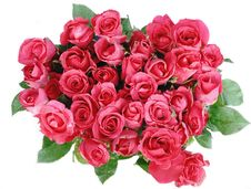 Free Red Roses Isolated Stock Photo - 20245790