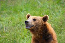 Free Grizzly Smile Stock Photos - 20246103