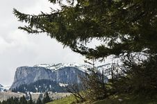 Free Pines And Mountain Stock Images - 20246384