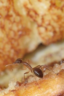 Free Ant On Bread Stock Images - 20248034
