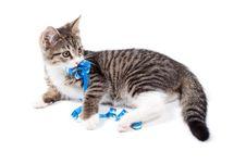 Free Kitten Stock Photo - 20248230