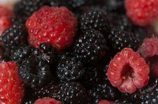 Free Blackberry Stock Photos - 20248893