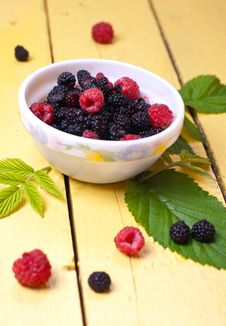 Free Forest Berries Royalty Free Stock Photos - 20248968