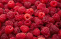 Free Red Raspberries Stock Photography - 20252162
