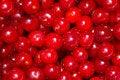 Free Berries  Ripened Cherries Royalty Free Stock Photos - 20255008