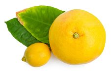 Free Citrus Fruit Royalty Free Stock Photo - 20250955