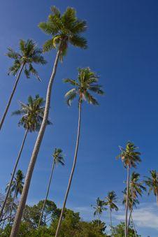 Free Coconut Trees Stock Image - 20250991