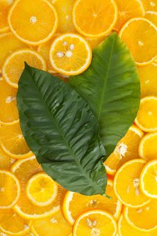 Free Orange Fruit And Leaf Background Royalty Free Stock Image - 20251026
