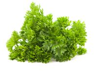 Free Curly Parsley Royalty Free Stock Images - 20251079