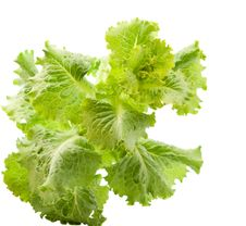 Free Lettuce Leaves Royalty Free Stock Photography - 20251117