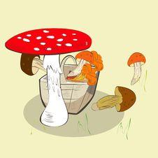 Mushrooms In Basket Stock Photo