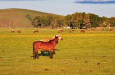 Free Pasture Horses Royalty Free Stock Photos - 20251598