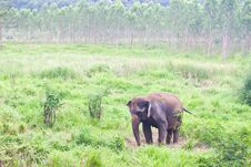 Free Wild Elephant Stock Photos - 20251723