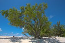 Free Tree By The Beach 1 Royalty Free Stock Photos - 20251818