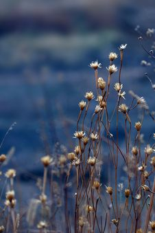 Free Dry Grass Stock Images - 20251954