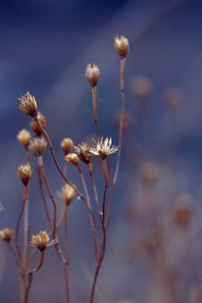 Free Dry Grass Stock Photo - 20252000