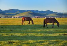 Free Pasture Horses,Dawn Stock Photography - 20252752