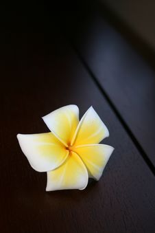 Free Frangipani Flower On A Wooden Surface Royalty Free Stock Photos - 20253848