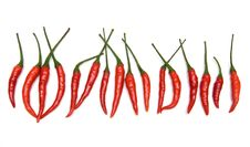 Free Red Chili Peppers Royalty Free Stock Image - 20254666