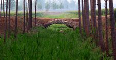 Free Stone Bridge Stock Image - 20254961