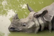 Free Rhinoceros Royalty Free Stock Photography - 20255467